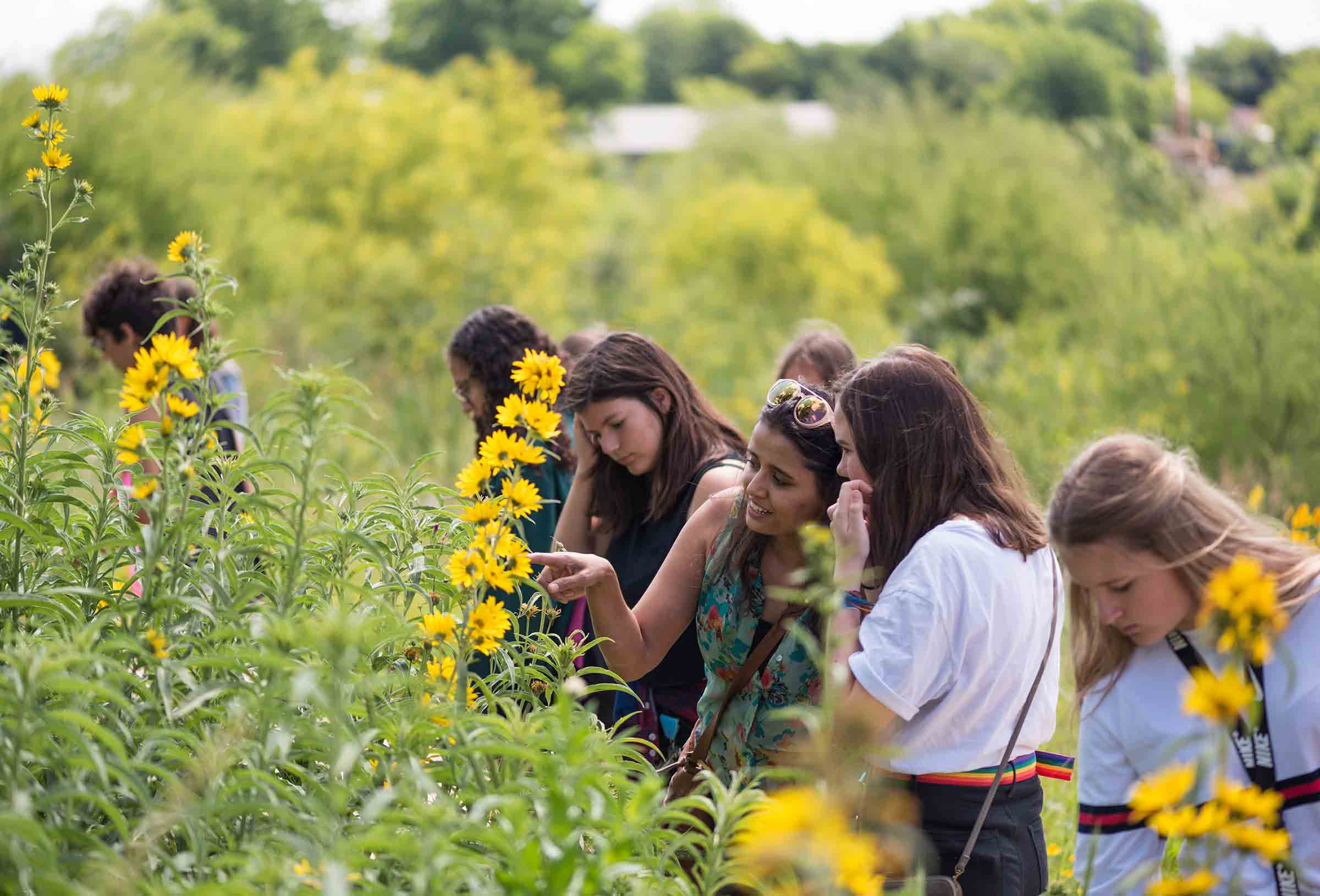 Event Image - Confluence Park Sunflowers